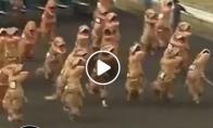 Dinozaurų lenktynės
