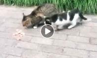 Katinas nenori dalintis savo maistu
