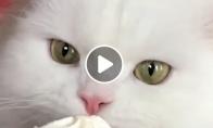 Godžiausia katė internete