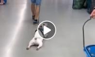 Šuo tingi judinti savo kojas