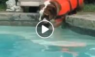 Šunytis mokinasi plaukti
