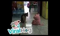 Katinas užpuola žaislą