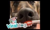 Šuo ir dantų higiena