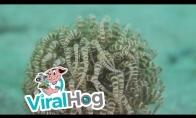 Įdomus vandens gyvūnas