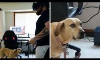 Šuniui nelabai patinka virtualios realybės žaidimai