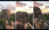 Šalia dramblio Pietų Afrikoje