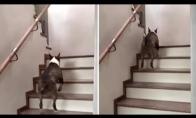 Įdomus būdas užlipti laiptais
