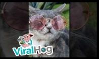 Katinas atrodo kietai su akiniais