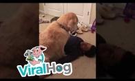 Šuo nori būti ištisai glostomas