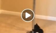 Katinukas šoka prie stulpo