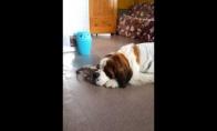 Katė neatstoja nuo šuns