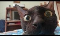 Keistos katino reakcijos