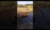 Šuo išsimaudo purvo vonioje