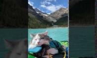Štai kas būna, kai į kelionę pasiimi katiną