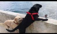 Šunys nešoka paskui į vandenį