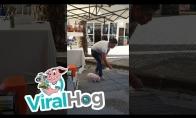 Kiaulaitės pasirodymas ant gatvės Ispanijoje
