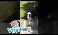 Šunys komandiškai atneša kamuoliuką