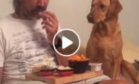 Šuo apsimeta, jog nežiūri į maistą