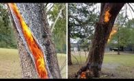 Medis po žaibo smūgio dega iš vidaus