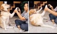 Kai šuniui reikia nukirpti nagus