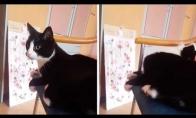 Katinas trenkia sau su uodega