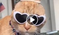 Juokingas katino įvaizdis