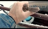 Prišalęs žvirblis