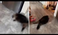 Katinas išsigąsta aliarmo signalo
