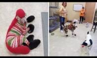 Moteris savo šunį paverčia laukiniais gyvūnais