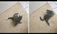 Katinas - suktukas
