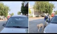 Nekantrus šuo automobilyje