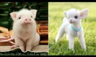 Mieli gyvūnai daro smagius dalykus