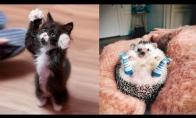 Šie gyvūnėliai - tikra mielumo bomba