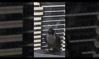 Paukštis juokiasi už lango