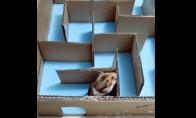 Žiurkėnas sugalvoja paprastesnį labirinto įveikimo būdą