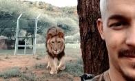 Liūto pričiupimas