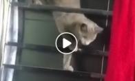 Katės - nindzės