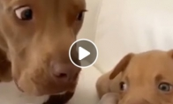 Šuniui ne visai patinka naujas konkurentas namuose