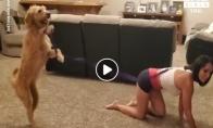 Šuo vedžioja šeimininkę