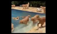 Šunyčiai lekia maudytis į baseiną