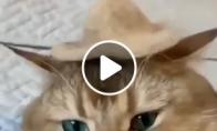 Kepuraitė iš katino kailio