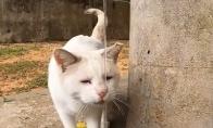 Katinukas geria vandenį iš krano