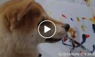 Šuo - dailininkas