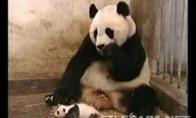 Panda Klyktelejo :)